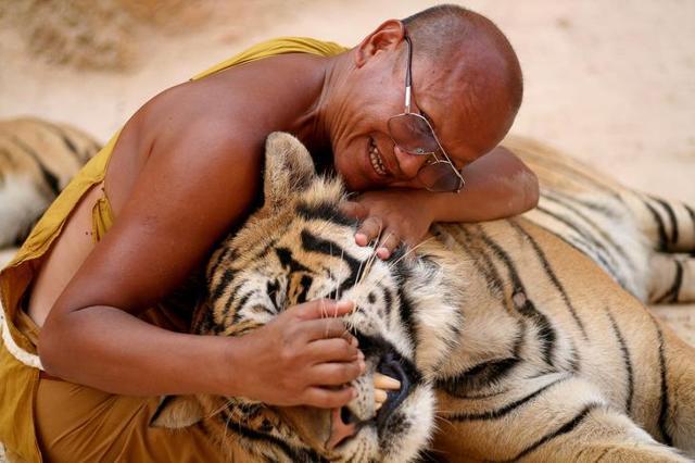 Животные в буддизме и их значение