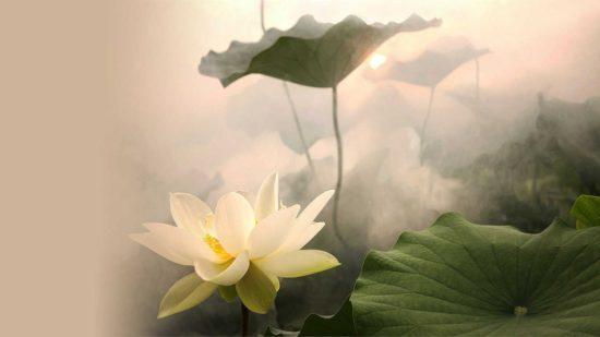 Дзэн буддизм: основные принцыпы, идеи, философия