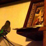 Молитва Матроне Московской о здоровье и исцелении, о здравии болящего
